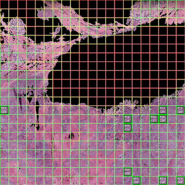 Top Tile Borders