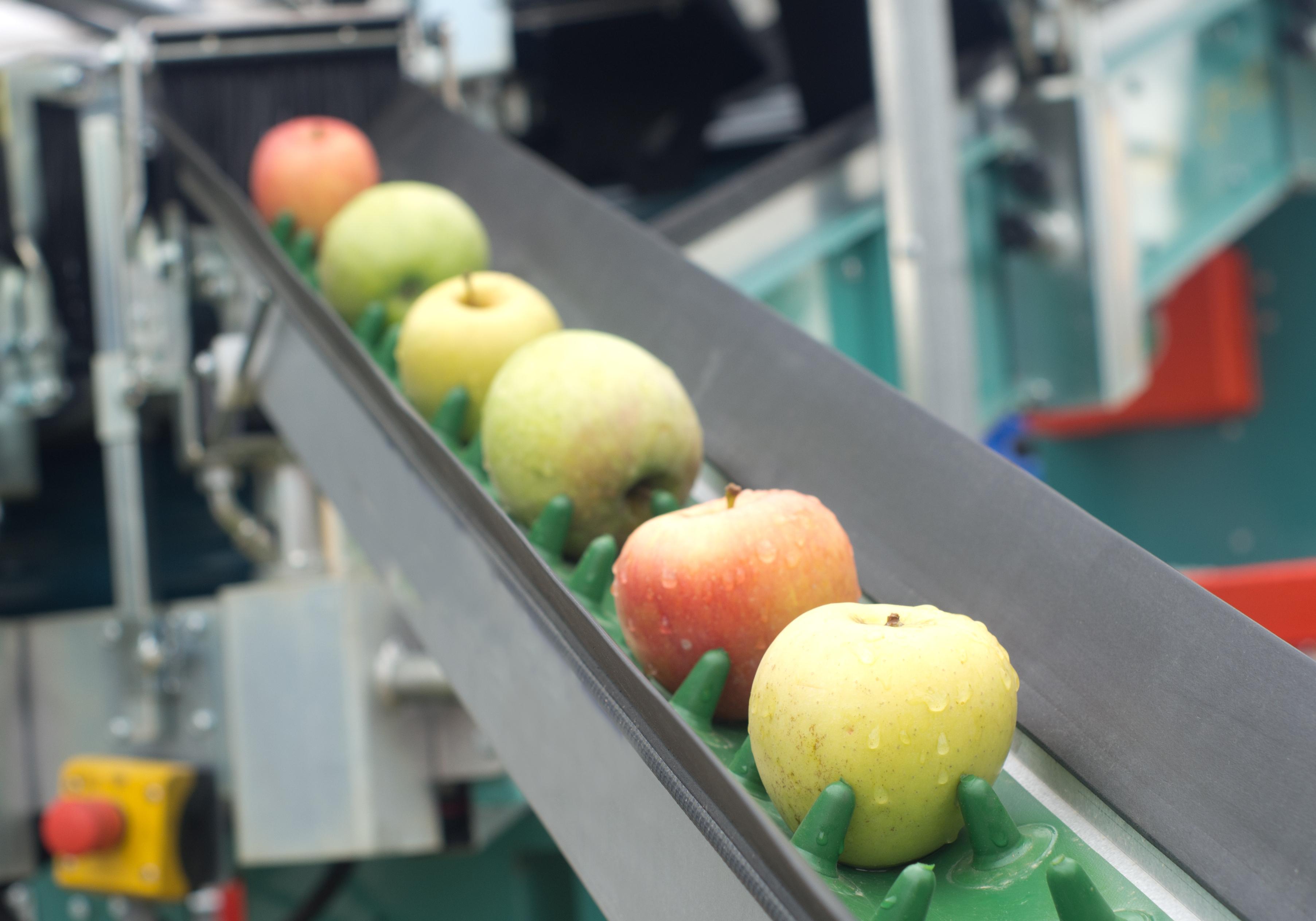 Image of apples on a conveyor belt