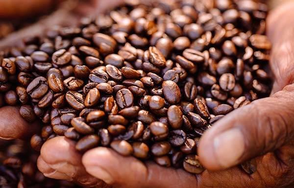 Create a fair trade supply chain network